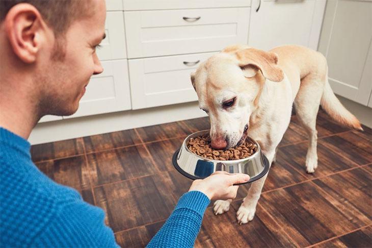 best dry dog food for seizures